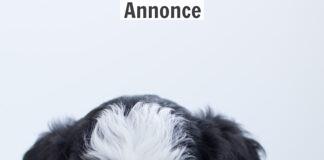 sort og hvis hundehvalp